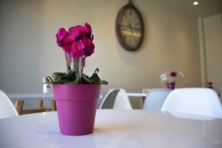 reception bar alissachni flower